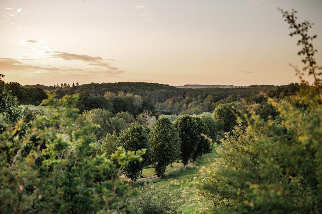 Photo d'une forêt avec un coucher de soleil