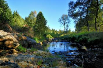 vallée et ruisseau en forêt