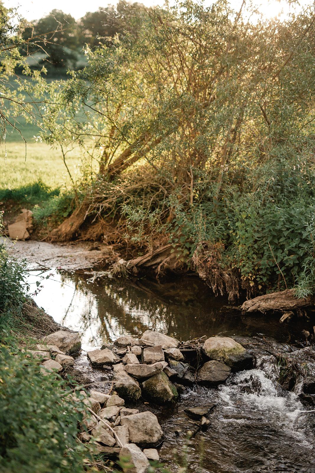 Photo d'un ruisseau dans les bois