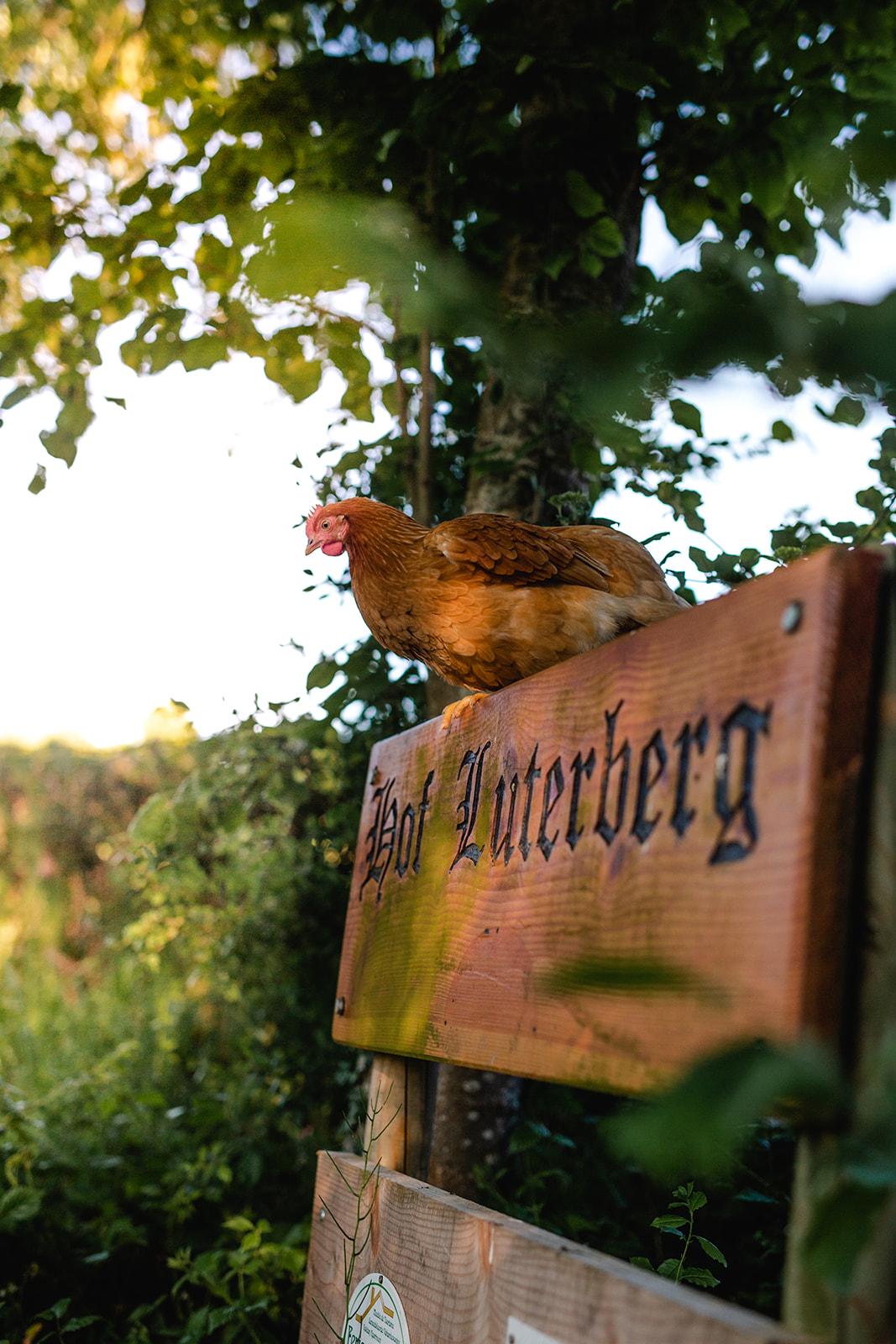 Photo d'une poule sur le panneau du gîte